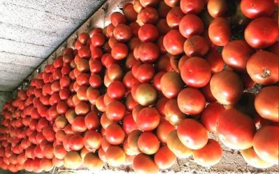 Summer on Mallorca – Tomato Festival in Maria de la Salut