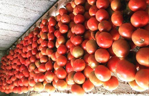 Das Tomatenfest , dieFira nocturna de la Tomàtiga de Ramellet, ein abendliches Fest zu Ehren der geschützten'Ramellet'Tomate